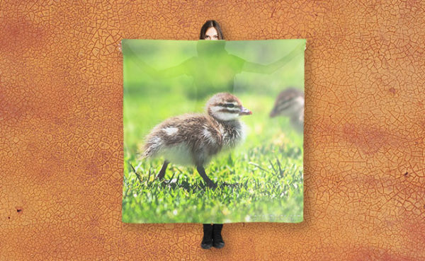 MAD About WA inspired Yanchep Duckling Scarf designed by Dave Catley and available in our MADCAT RedBubble store.