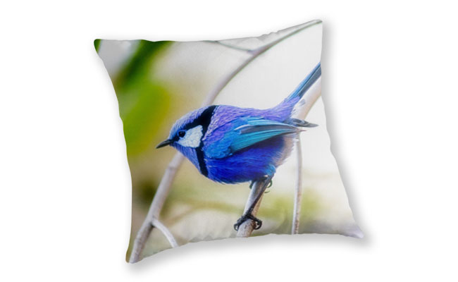 Blue Wren, Bushy Lakes Throw Pillow design by Dave Catley featuring a Blue Wren from Bushy Lakes in Margaret River available from our MADCAT.RedBubble.com store.