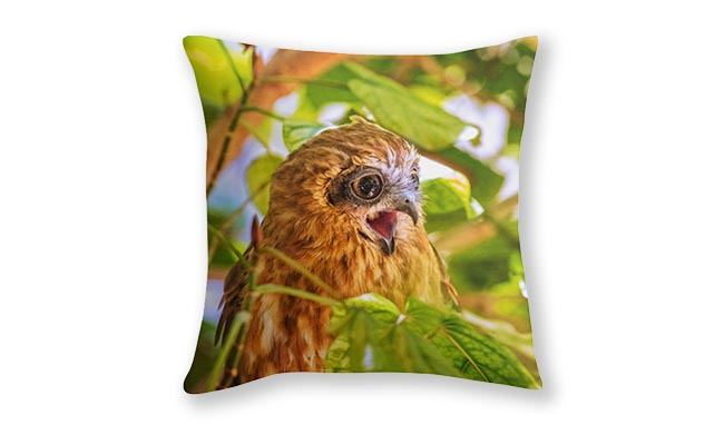 Southern Boobook Owl 2, Mindarie, Perth Cushion Cover design by Dave Catley Fine Art Photographer