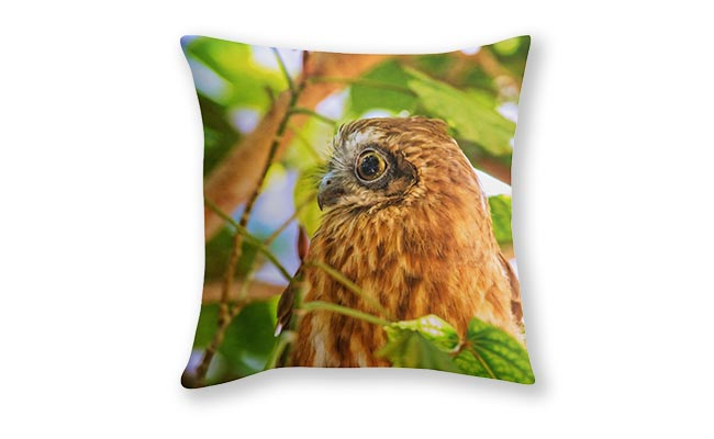 Southern Boobook Owl 3, Mindarie, Perth Cushion Cover design by Dave Catley Fine Art Photographer