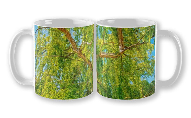 Colour of Life, Yanchep National Park Mug featuring Colour of Life, Yanchep National Park available from our MADAboutWA store.