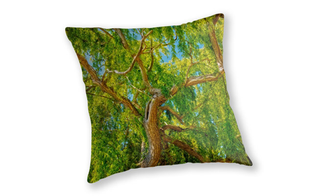 Colour of Life, Yanchep National Park Throw Pillow featuring Colour of Life, Yanchep National Park available from our MADCAT.RedBubble.com store.