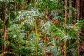 Deep In The Forest, Tamborine Mountain, Queensland
