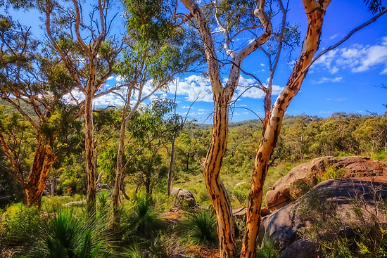 Heritage View, John Forest National Park