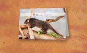 Kaya the Ringtail Possum, Native Animal Rescue Greeting Card featuring Kaya the Ringtail Possum, Native Animal Rescue available from our MADCAT.RedBubble.com store.