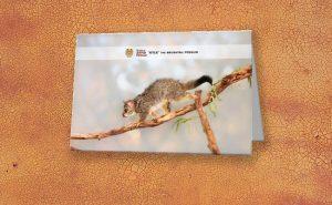 Kyle the Brushtail Possum, Native Animal Rescue Greeting Card featuring Kyle the Brushtail Possum, Native Animal Rescue available from our MADCAT.RedBubble.com store.