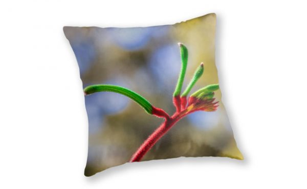 Red and Green Kangaroo Paw, Kings Park Throw Pillow featuring Red and Green Kangaroo Paw, Kings Park available from our MADCAT.RedBubble.com store.