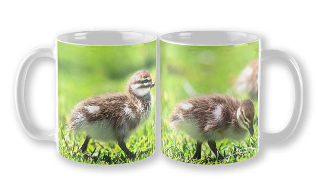 Rogue Duckling, Yanchep National Park Mug design by Dave Catley featuring Ducklings mostly in a row, Yanchep National Park available from our MADAboutWA store.
