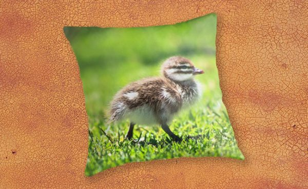 Rogue Duckling, Yanchep National Park Throw Pillow design by Dave Catley featuring Ducklings mostly in a row, Yanchep National Park available from our MADCAT.RedBubble.com store.