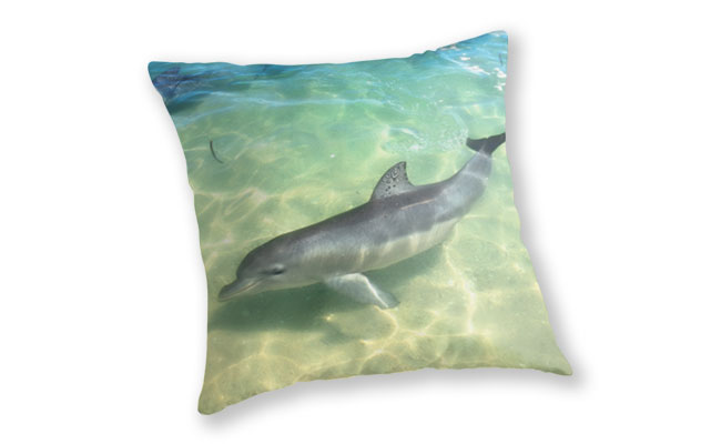 Samu 1 , Monkey Mia, Shark Bay Throw Pillow design by Dave Catley featuring Dolphin, Samu , Monkey Mia, Shark Bay available from our MADCAT.RedBubble.com store.