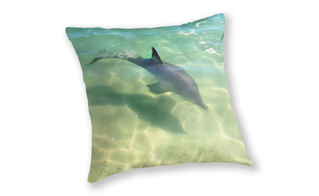 Samu the Baby Dolphin 3, Monkey Mia, Shark Bay Throw Pillow featuring Samu the Baby Dolphin from Monkey Mia available from our MADCAT.RedBubble.com store.