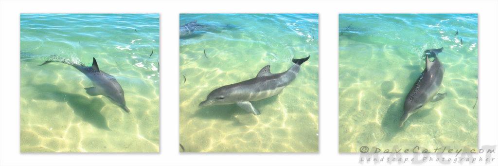 Samu, Monkey Mia, Shark Bay, Western Australia
