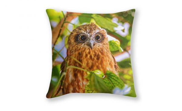 Southern Boobook Owl 1, Mindarie, Perth Cushion Cover design by Dave Catley Fine Art Photographer