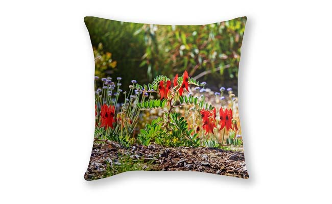 Sturt's Desert Pea, Kings Park, Perth Cushion Cover designed by Dave Catley, Fine Art Photographer, available in our MADAboutWA Store now.