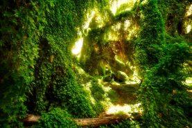 The Secret Garden, Gwelup