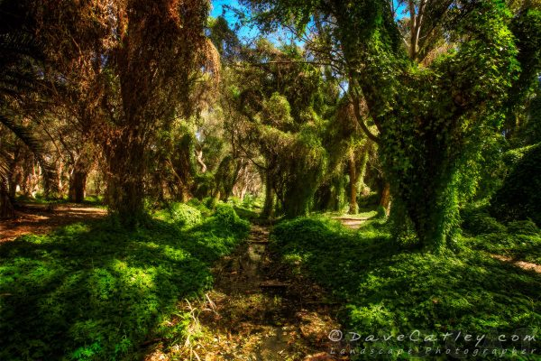 The Secret Garden, Perth, Western Australia