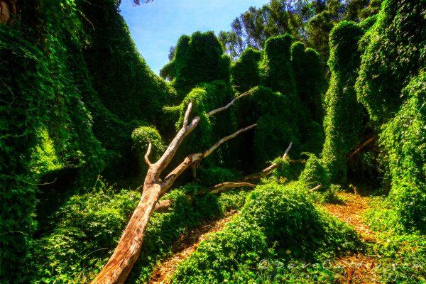 The Secret Garden, Perth, Western Australia
