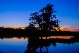 Wagardu Lake, Yanchep National Park