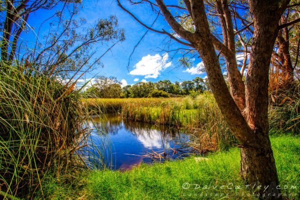 Wetland Lake, The Secret Garden Perth, Western Australia