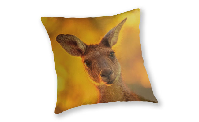 What's Up, Yanchep National Park Throw Pillow design by Dave Catley featuring Attentive Kangaroo, Yanchep National Park available from our Dave-Catley.pixels.com store.
