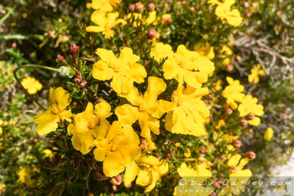 Wildflowers of Whiteman Park