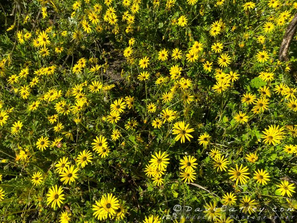 Another array of yellow flowers, beautiful!